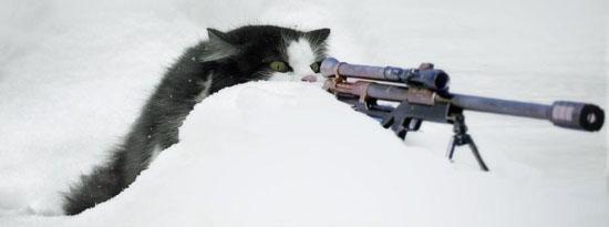 Pusekatt med killer instinct