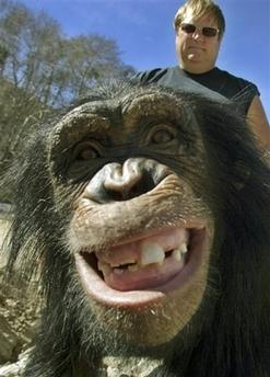 Dyrepasser hengir seg til ellevill apesex. Julius gliser frekt under påføring av margarin.
